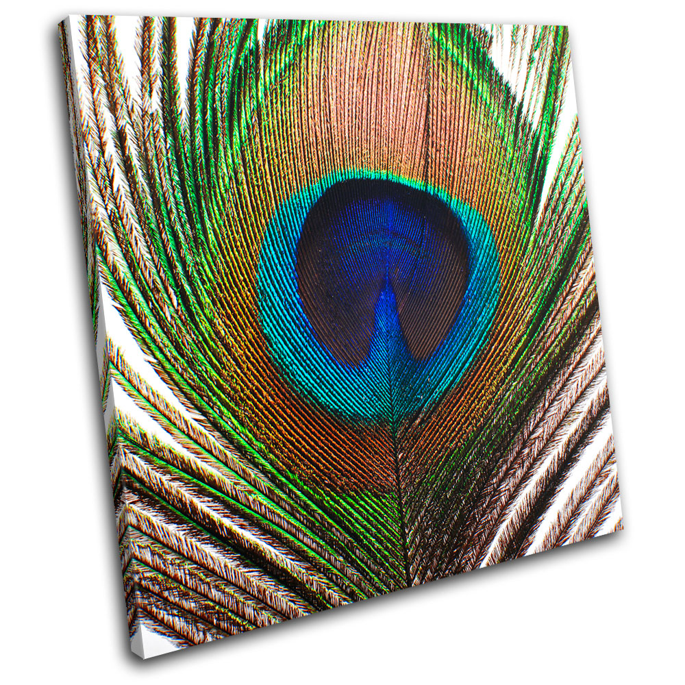 Colorful peacock feather painting